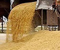 grain photo 04.jpg