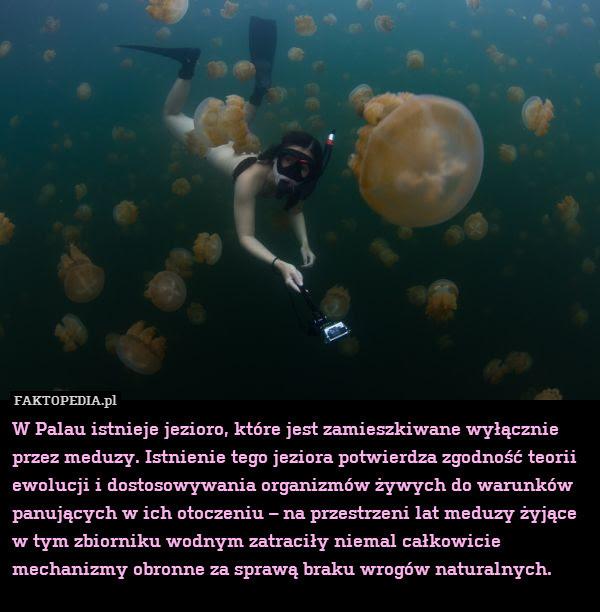 W Palau istnieje jezioro, które – W Palau istnieje jezioro, które jest zamieszkiwane wyłącznie przez meduzy. Istnienie tego jeziora potwierdza zgodność teorii ewolucji i dostosowywania organizmów żywych do warunków panujących w ich otoczeniu – na przestrzeni lat meduzy żyjące w tym zbiorniku wodnym zatraciły niemal całkowicie mechanizmy obronne za sprawą braku wrogów naturalnych.
