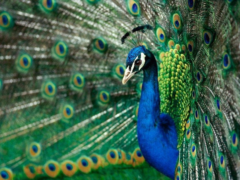 The most rare and beautiful birds in the world