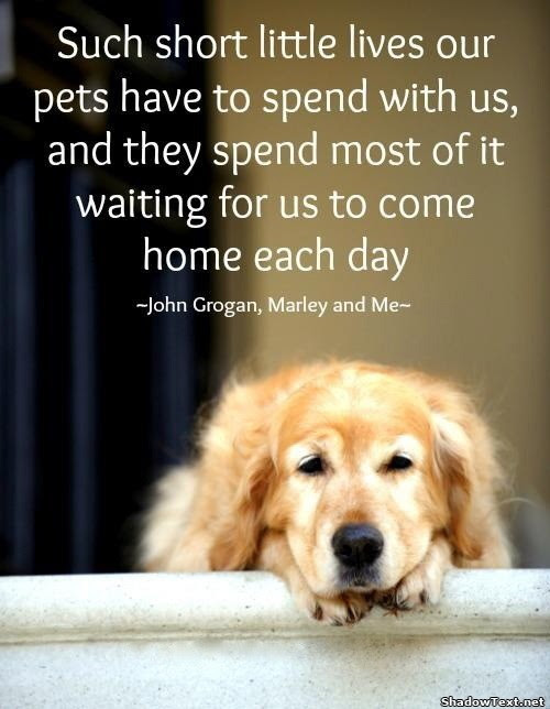 Marley And Me Quote Quote Number 616991 Picture Quotes