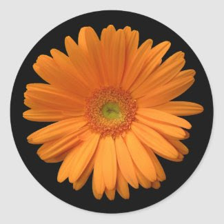 Orange gerber daisy sticker