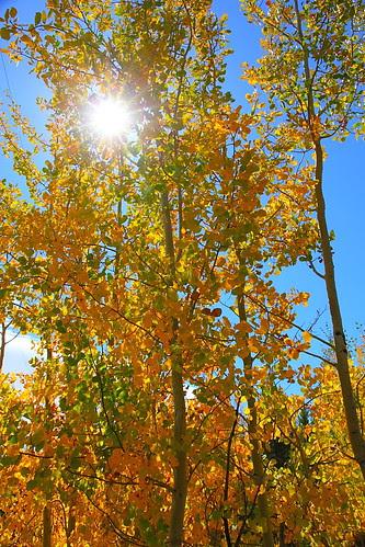 IMG_8098 Taggart Lake Trail, Grand Teton National Park