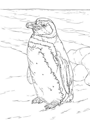 Disegno Di Pinguino Di Magellano Realistico Da Colorare Disegni Da