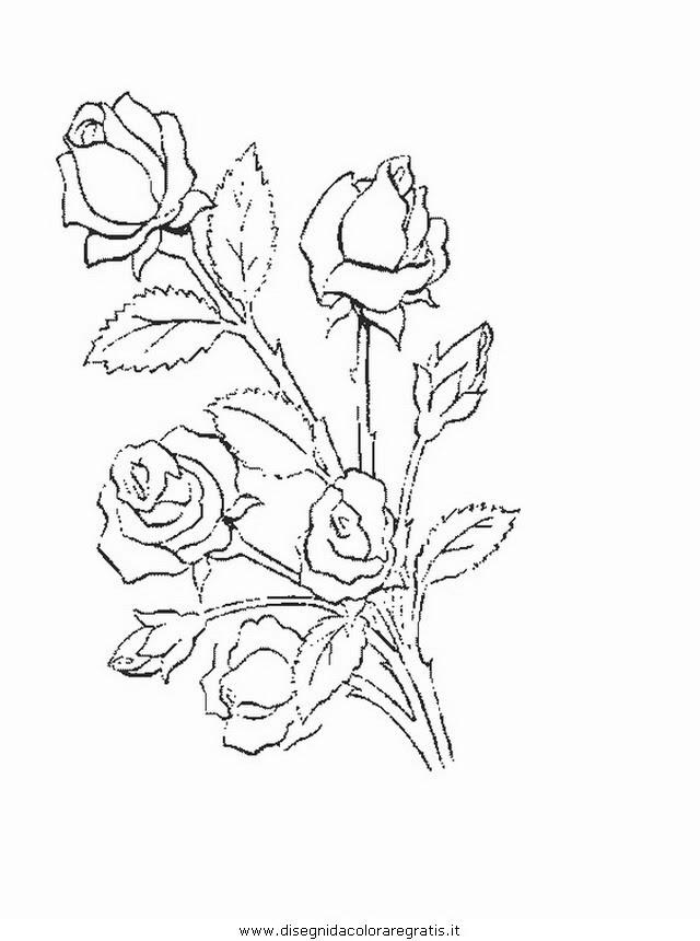Stella Alpina Fiore Disegno Stampae Colorare