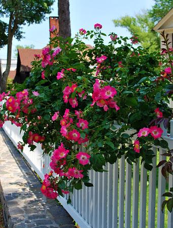 Essex Blooms