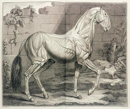 Philippe Étienne Lafosse 'Cours d'hippiatrique' 1772