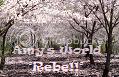 Amys World Rebe