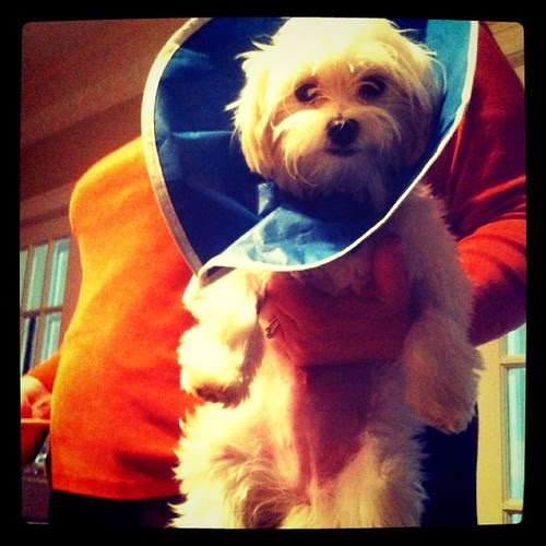 Ruby after surgery