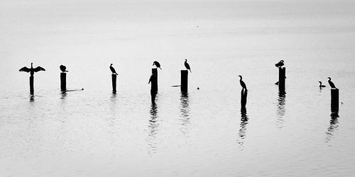 Birds por scherbis
