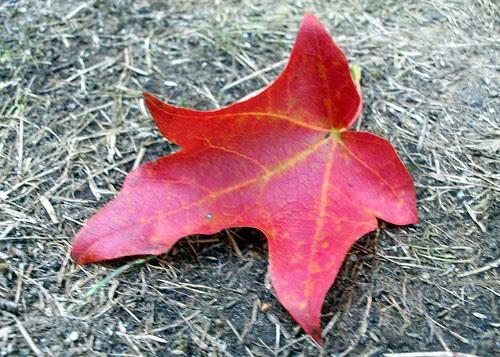 Leaf_10510b