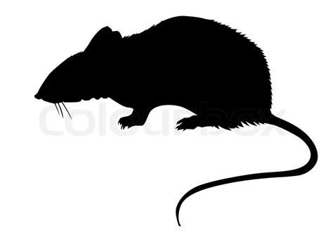 Silhouette of the rat on white background   Stock Photo   Colourbox