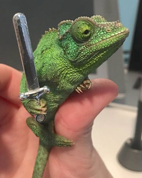 5 - Cute frog holding tiny sword.