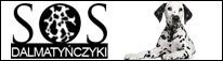 Pomóż dalmatyńczykom - sosdalmatynczyki.pl