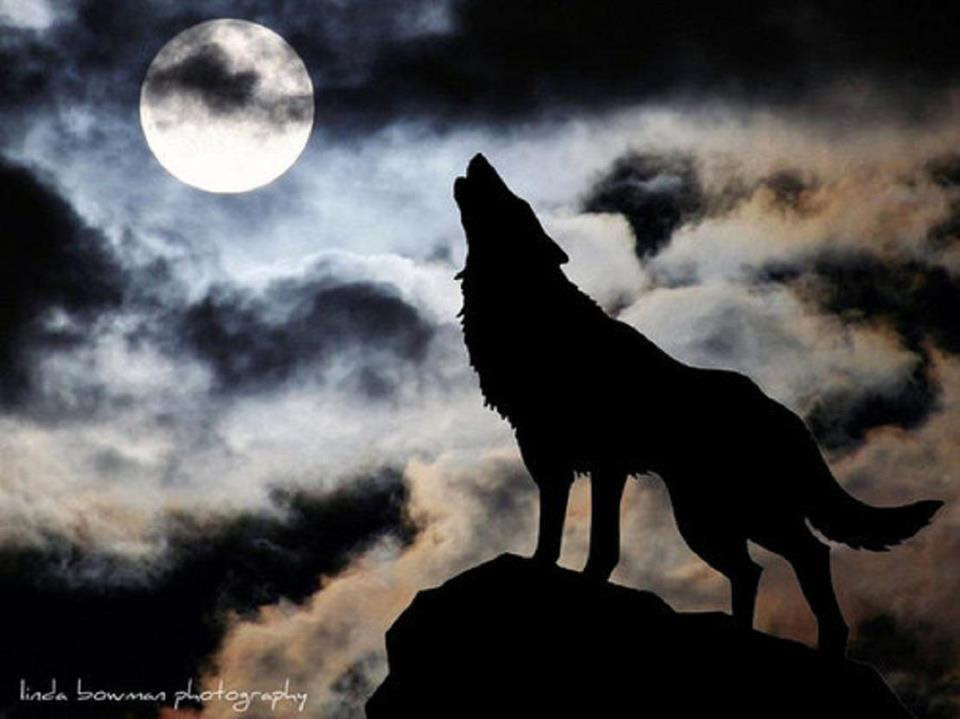 Wolf Howling Moon Drawing At Getdrawingscom Free For Personal Use