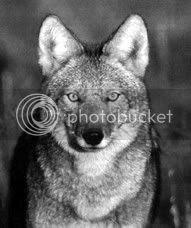 El coyote somos todos