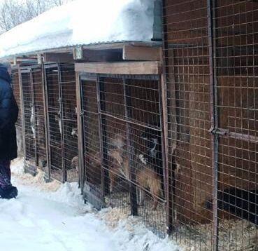 Собачий приют на Калтанской, 1 проверили еще и депутаты