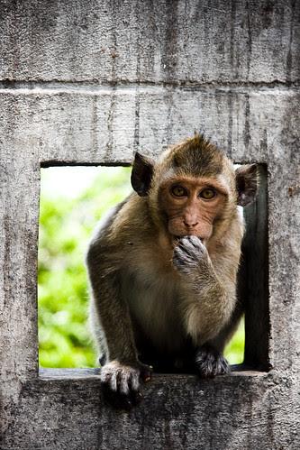 Cute monkey in Thailand