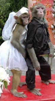 'I now pronounce you monkey and wife': Animals are married