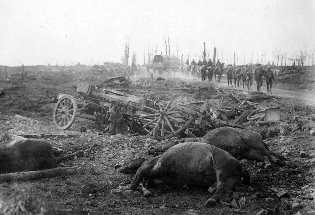 Os animais também lutaram na Primeira Guerra Mundial 43