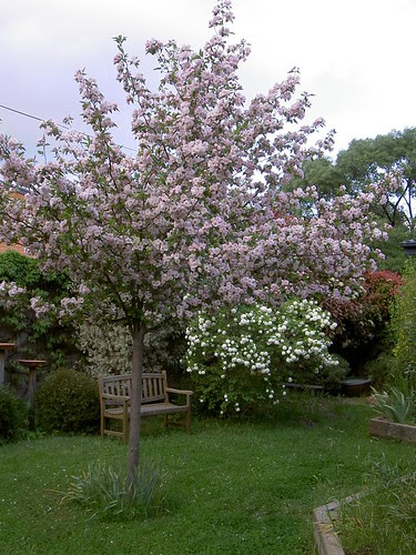 Back garden in late spring