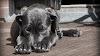 Cinco cosas cotidianas que a los perros les da miedo (y a lo mejor no lo sabes)
