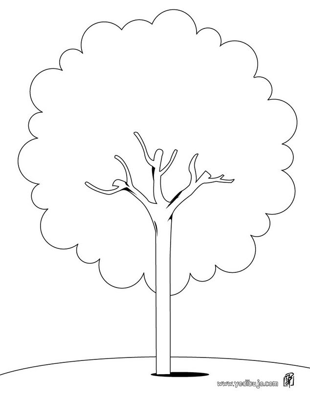 árboles Para Colorear Dibujos Para Colorear Imprime Dibujos Para
