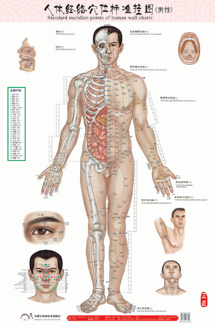 Male Human Meridian Points Wallmap Acupuncture Massage