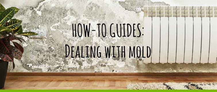 mold_in_apartment_how_to_clean2