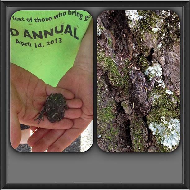 Eli's find... #treefrog, #macefamilysummer