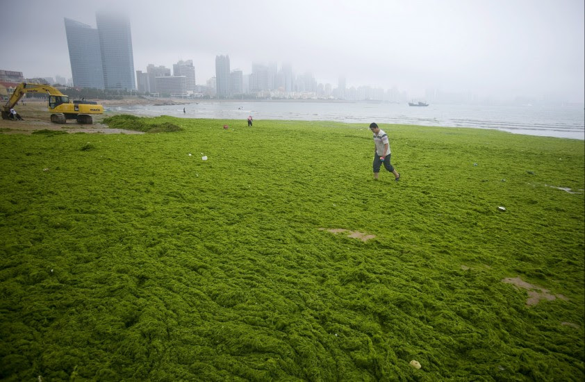 Invasión de algas