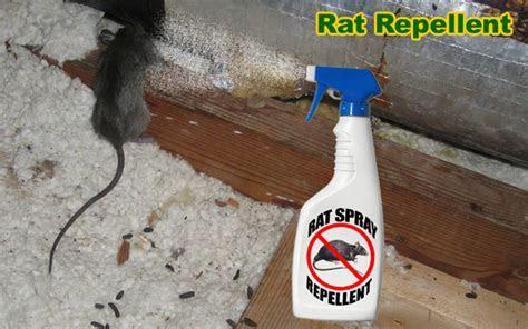 Rat Repellent   An Analysis of Mothballs, Cat Urine, Peppermint, Rodent Deterrents