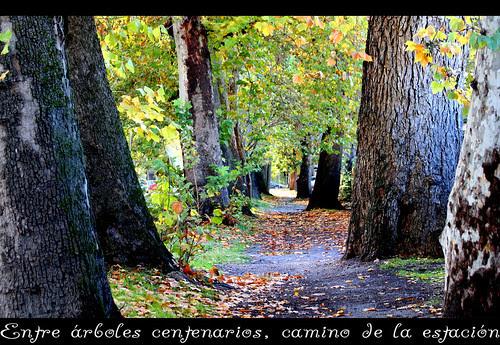 en aranjuez: camino de la estación
