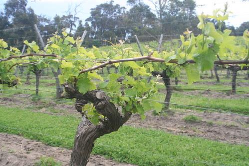 Cullen Winery