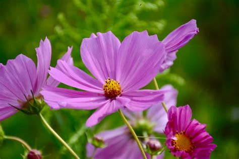 pink petaled flower  daytime  stock photo