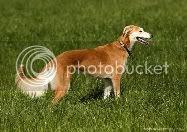 Dog Walking Pet sitting