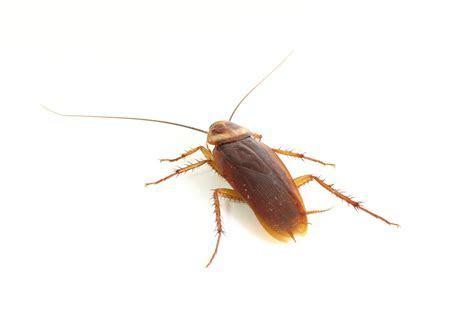 How To Prevent German Cockroaches ? Gemtek Pest Control