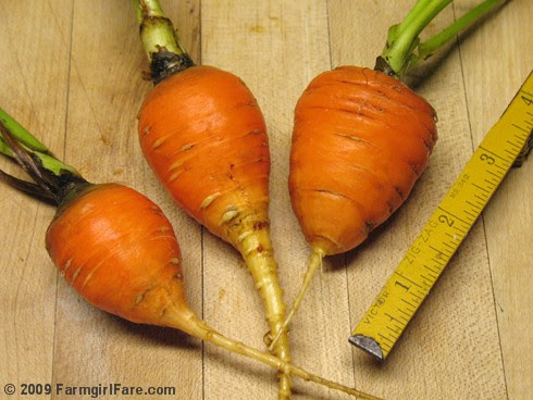 Parisienne Carrots Harvested from the Kitchen Garden September 2009