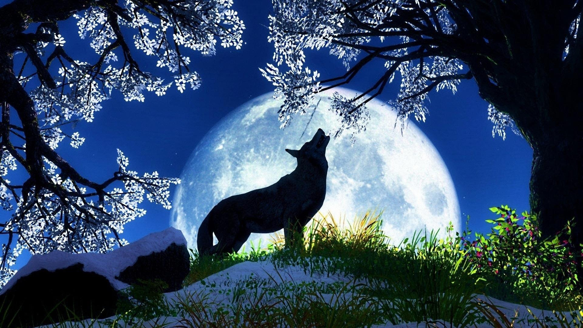 17 Download Wolf Moon Wallpaper Tags Blossom Wolf Tree Howling