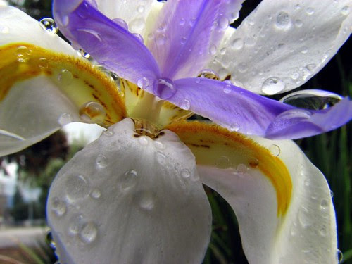 Shower Flower by Renee Silverman