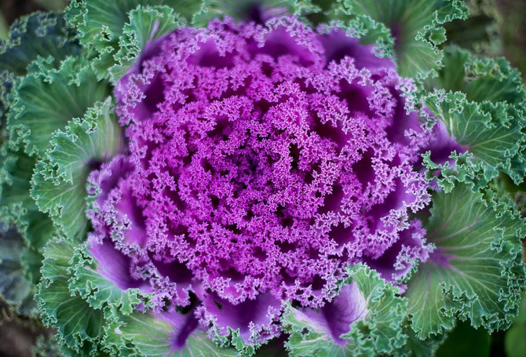 25 Fotografias de plantas para os amantes da matemática 22