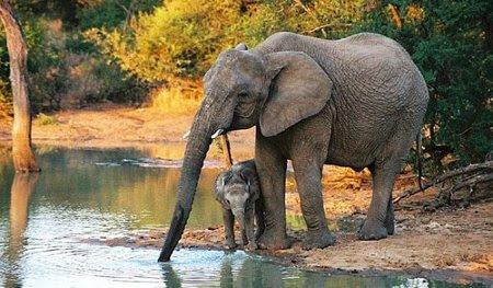 Qué Significa Soñar Con Elefantes Soy Esotérica