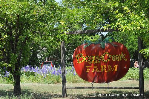 Larkspur at Boggy Creek Farm