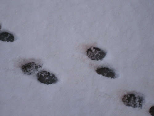 Lulu's foot prints