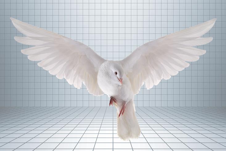 Tegmark_BR-Dove