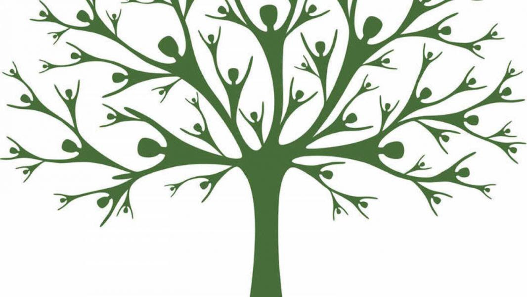 Crean El árbol Genealógico Más Grande Del Mundo Con 13 Millones De