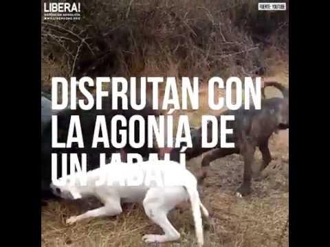 LA CAZA ES CRUELDAD