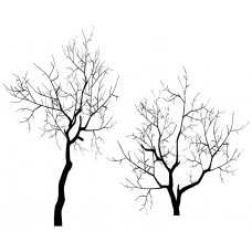 Pine Tree Black White Graphics Design Jy37