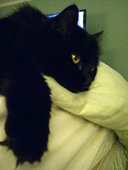 Huggy Bear lounging on the edge of the bed