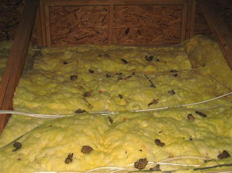 Image Gallery moles in attic