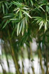 Singapore - Chinese Garden